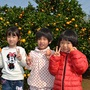 ☆2016年☆ みかん狩り In 針尾 No.11